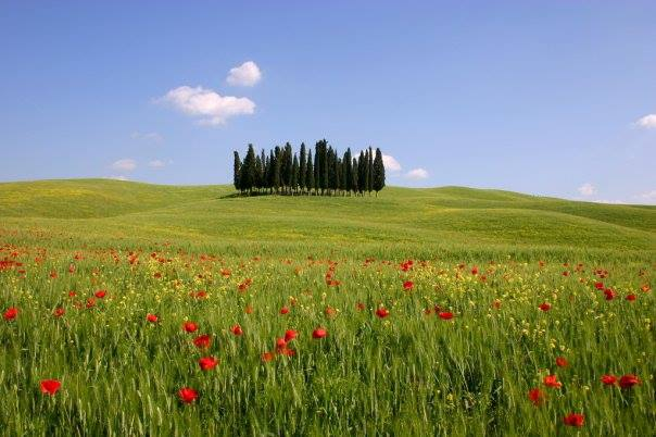 Women Tours Italy, Small Group Tour, Susan Van Allen, 100 Places in Italy Every Womn Should Go, Golden Week in Tuscany, For Women Only